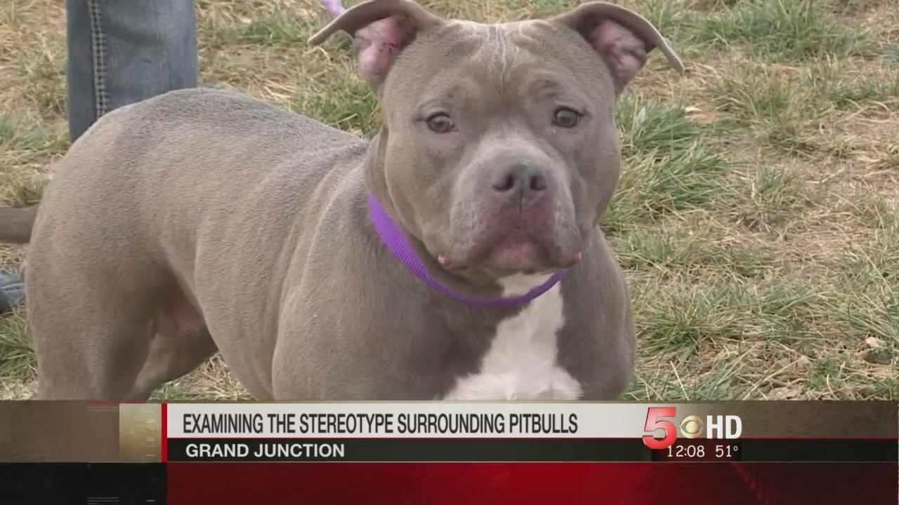 e8bebdeb » Putting Pitbull Perceptions In the Doghouse – WesternSlopeNowThe Doggy  Blogger