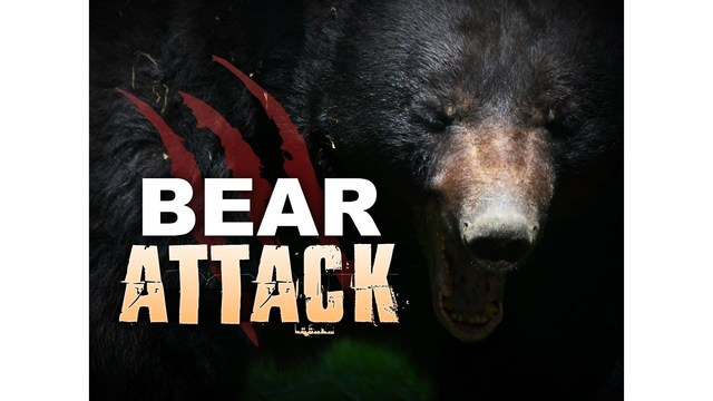 Bear Attacks Girl In Orchard Mesa