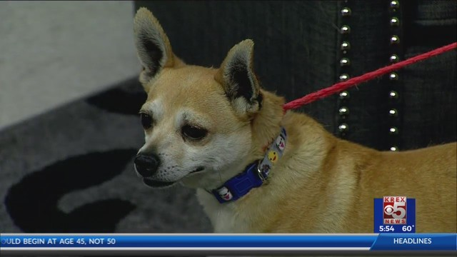 Pet of the Week: Gypsy!