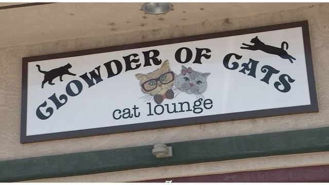 New Cat Cafe Opens This Weekend!