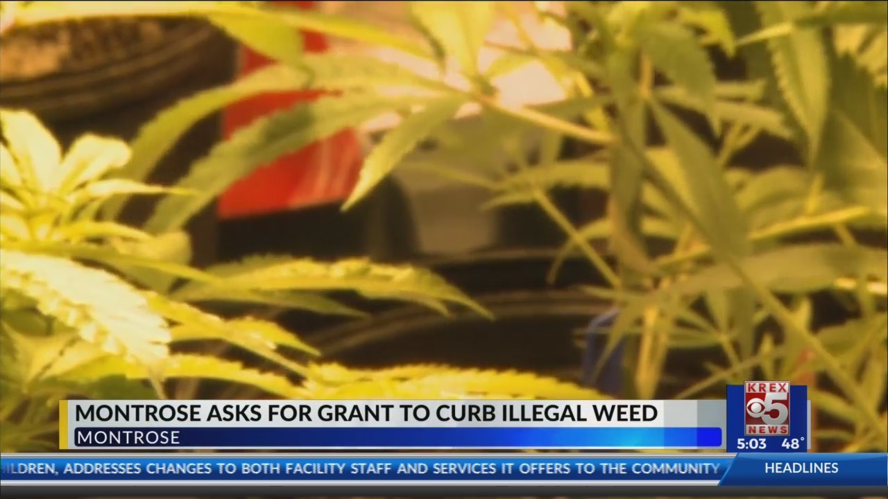 montrose applies for grant to help curb illegal weed