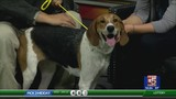 Pet of the Week: Bonny!