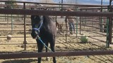 Homes for Wild Horses